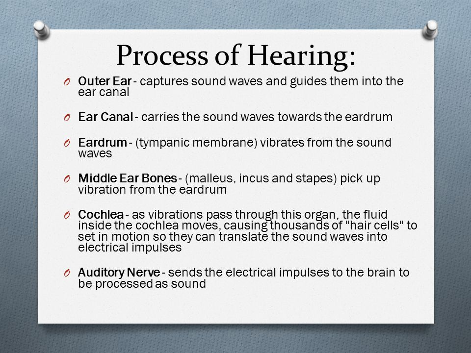 Process of Hearing: O Outer Ear - captures sound waves and guides them into the ear canal O Ear Canal - carries the sound waves towards the eardrum O Eardrum - (tympanic membrane) vibrates from the sound waves O Middle Ear Bones - (malleus, incus and stapes) pick up vibration from the eardrum O Cochlea - as vibrations pass through this organ, the fluid inside the cochlea moves, causing thousands of hair cells to set in motion so they can translate the sound waves into electrical impulses O Auditory Nerve - sends the electrical impulses to the brain to be processed as sound