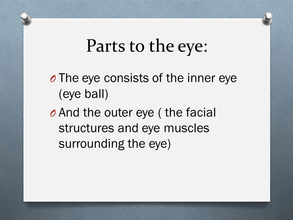 Parts to the eye: O The eye consists of the inner eye (eye ball) O And the outer eye ( the facial structures and eye muscles surrounding the eye)