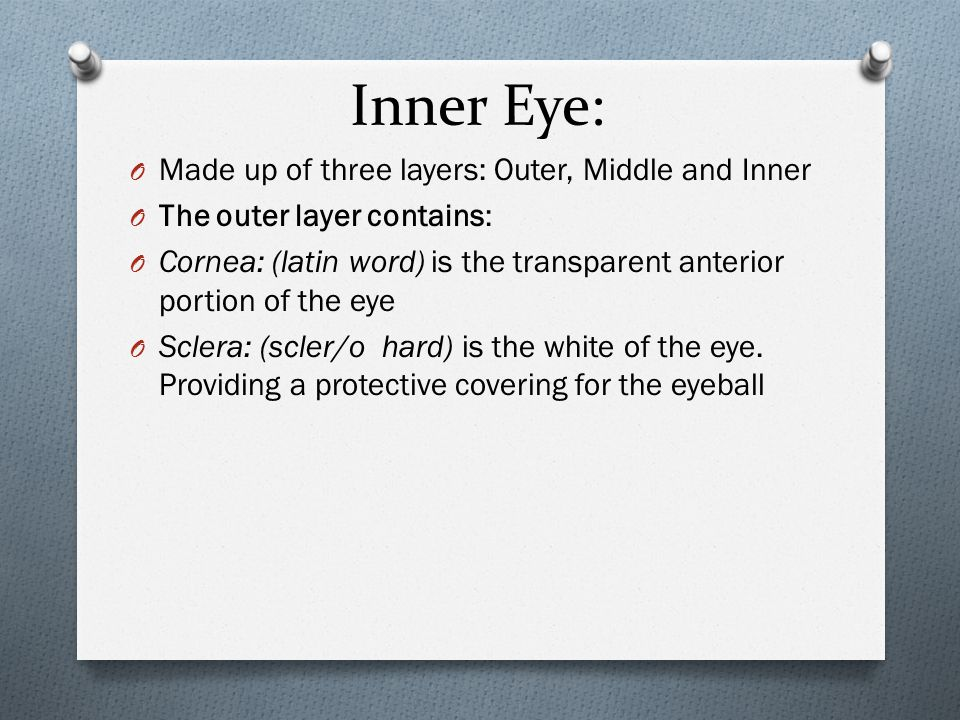 Inner Eye: O Made up of three layers: Outer, Middle and Inner O The outer layer contains: O Cornea: (latin word) is the transparent anterior portion of the eye O Sclera: (scler/o hard) is the white of the eye.