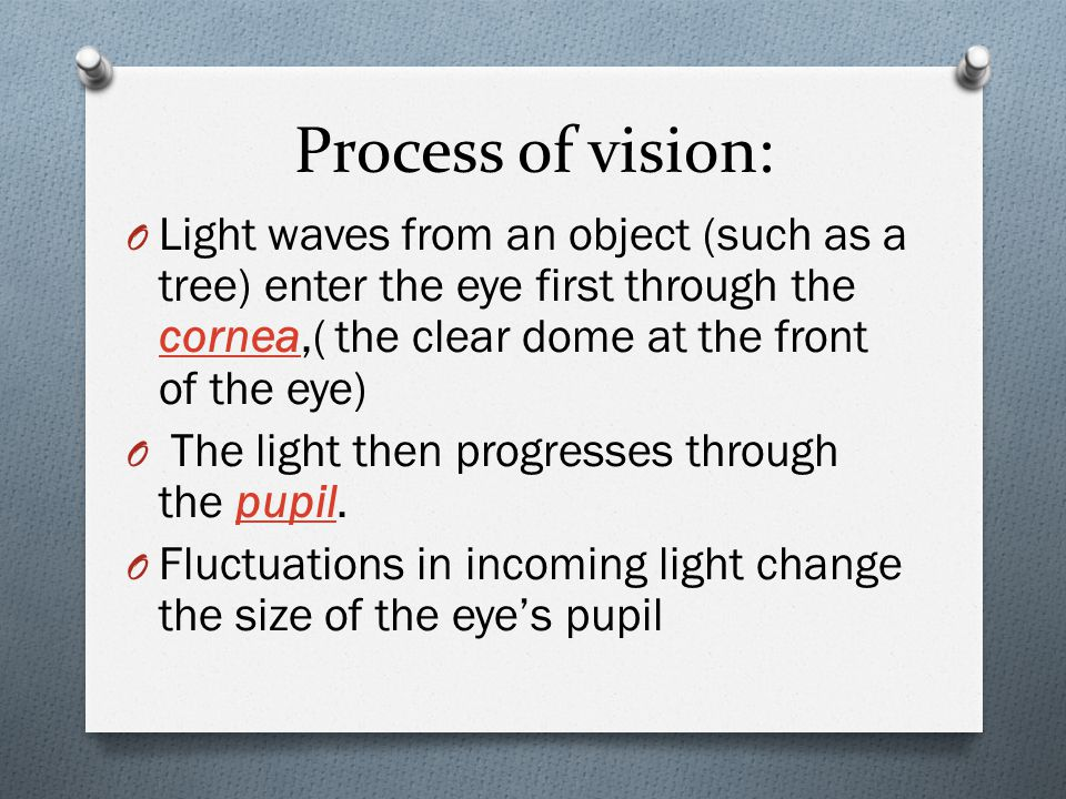 Process of vision: O Light waves from an object (such as a tree) enter the eye first through the cornea,( the clear dome at the front of the eye) cornea O The light then progresses through the pupil.pupil O Fluctuations in incoming light change the size of the eye's pupil