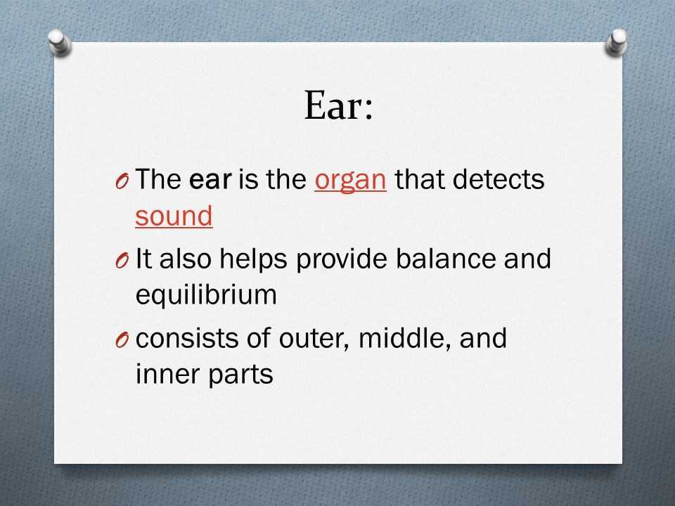 Ear: O The ear is the organ that detects soundorgan sound O It also helps provide balance and equilibrium O consists of outer, middle, and inner parts