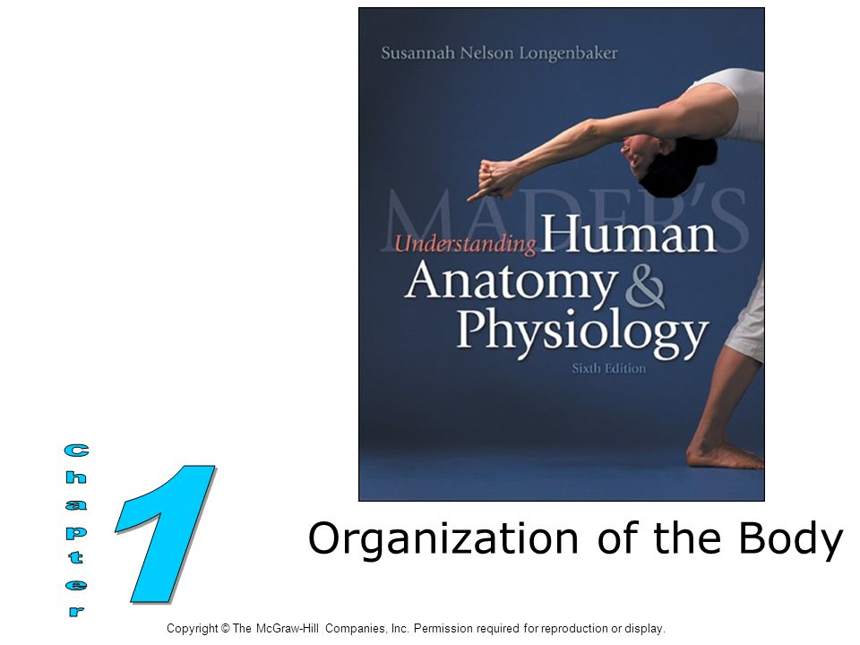 Organization of the Body Copyright © The McGraw-Hill Companies, Inc.