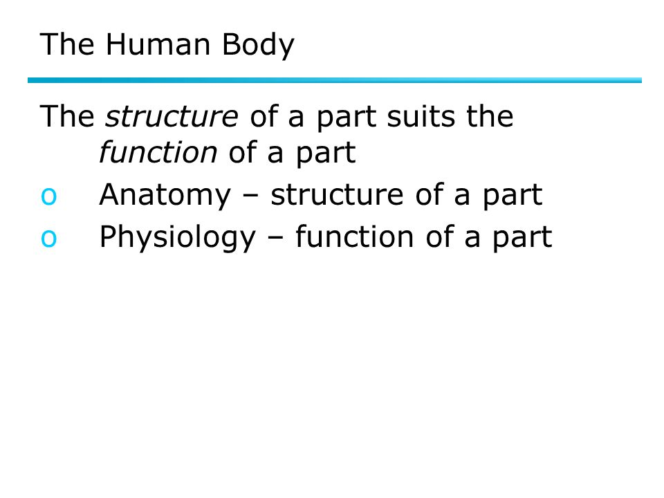 The Human Body The structure of a part suits the function of a part oAnatomy – structure of a part oPhysiology – function of a part