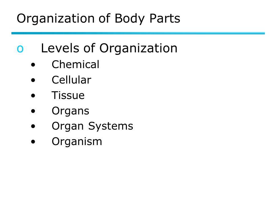Organization of Body Parts oLevels of Organization Chemical Cellular Tissue Organs Organ Systems Organism