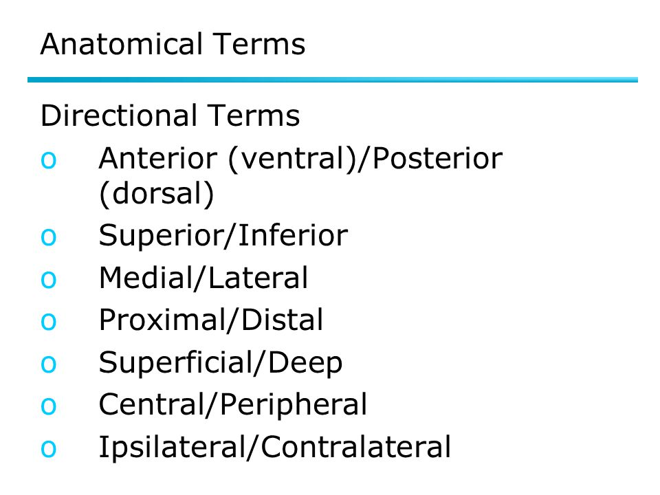 Anatomical Terms Directional Terms oAnterior (ventral)/Posterior (dorsal) oSuperior/Inferior oMedial/Lateral oProximal/Distal oSuperficial/Deep oCentral/Peripheral oIpsilateral/Contralateral