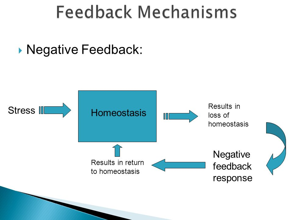  Negative Feedback: Homeostasis Stress Results in loss of homeostasis Negative feedback response Results in return to homeostasis
