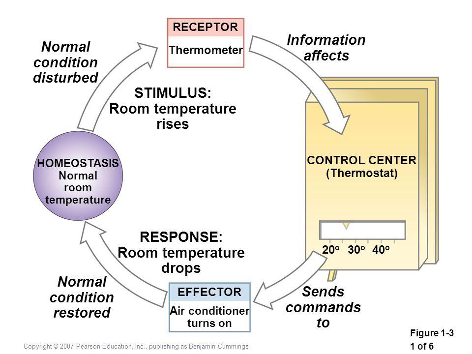 Copyright © 2007 Pearson Education, Inc., publishing as Benjamin Cummings RECEPTOR Thermometer STIMULUS: Room temperature rises Normal condition distu