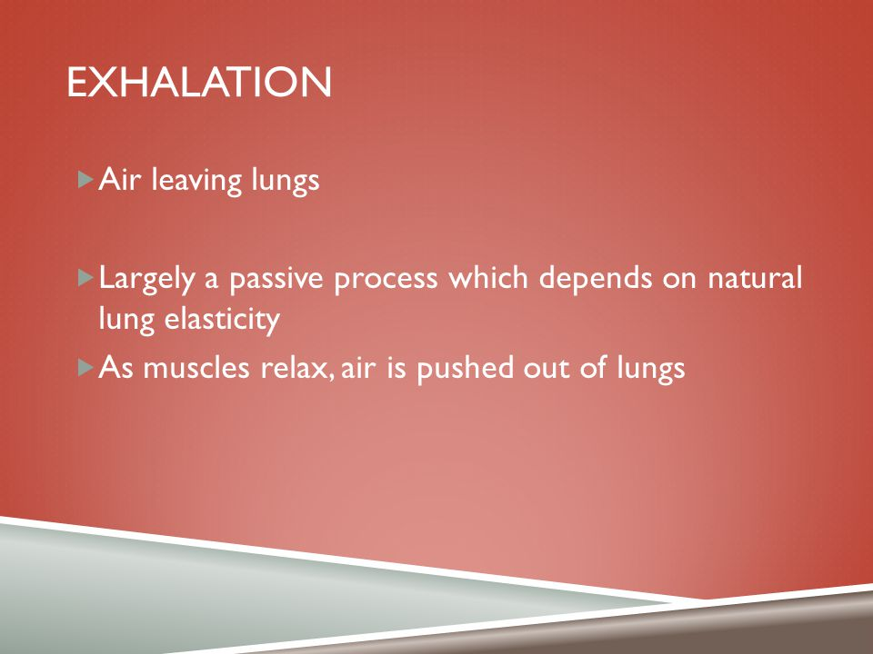 EXHALATION  Air leaving lungs  Largely a passive process which depends on natural lung elasticity  As muscles relax, air is pushed out of lungs