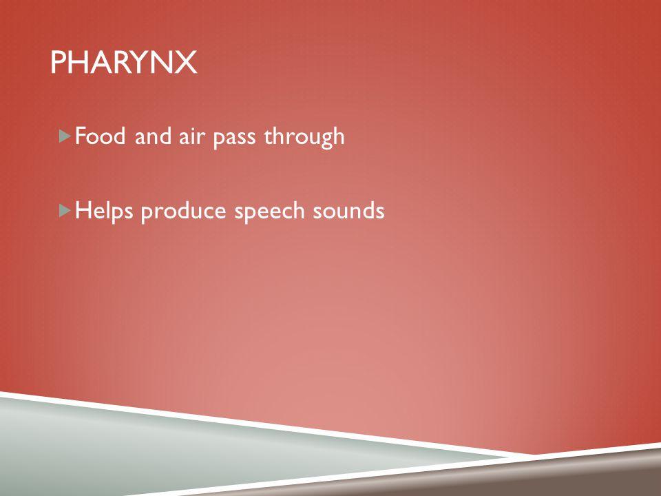 PHARYNX  Food and air pass through  Helps produce speech sounds