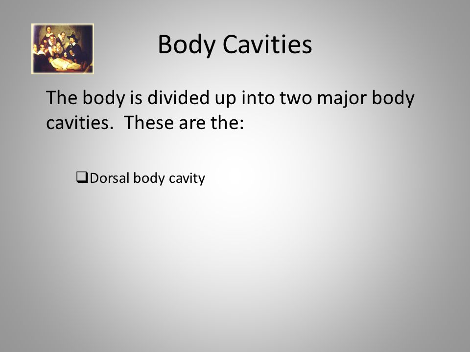 Body Cavities The body is divided up into two major body cavities.