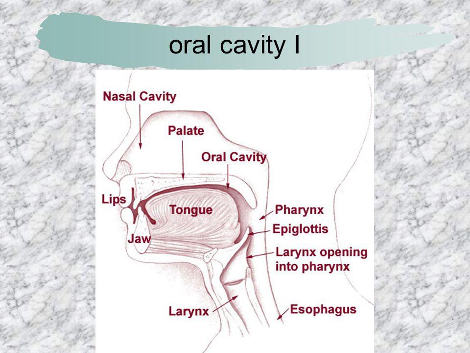 anatomy of liver I
