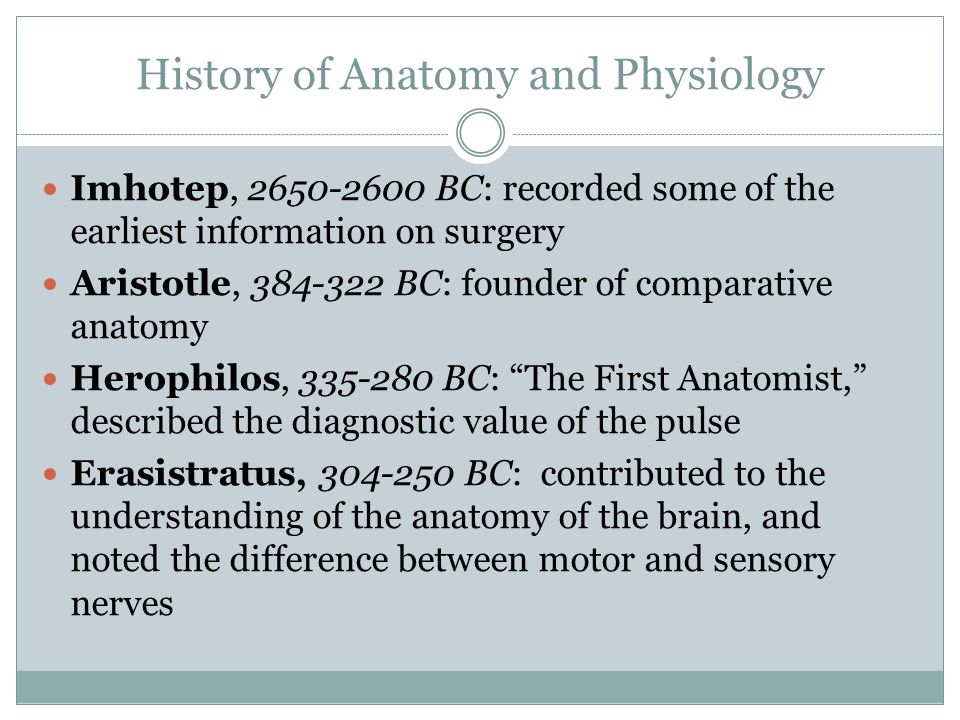 History of Anatomy and Physiology Galen, year 129-200 AD: First Great Anatomist, his writings remained unchallenged for 1,500 years.