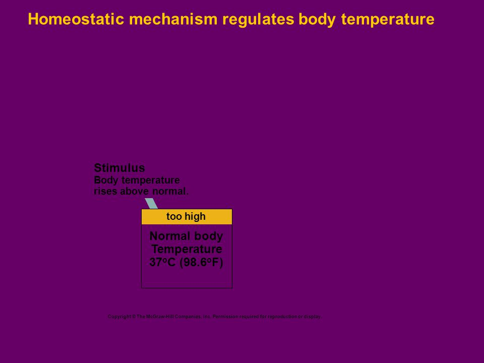 Homeostatic mechanism regulates body temperature Copyright © The McGraw-Hill Companies, Inc.