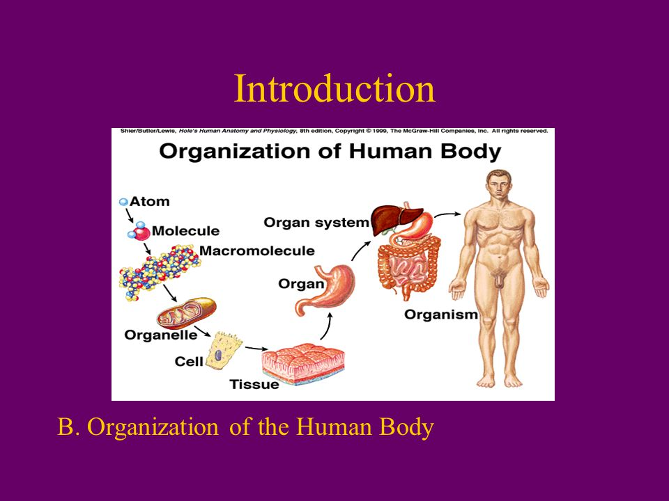 Introduction B. Organization of the Human Body