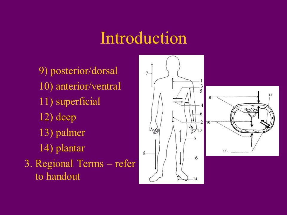 Introduction 9) posterior/dorsal 10) anterior/ventral 11) superficial 12) deep 13) palmer 14) plantar 3.