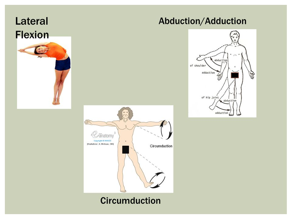 Lateral Flexion Abduction/Adduction Circumduction