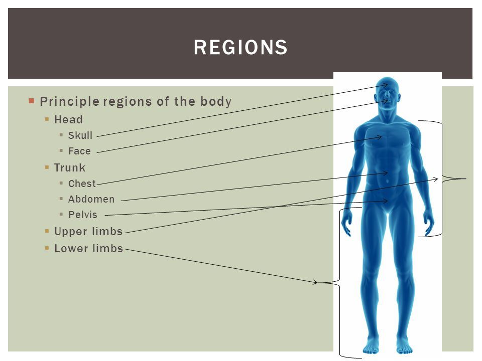  When the body is in anatomical position, it can be divided into three imaginary planes.