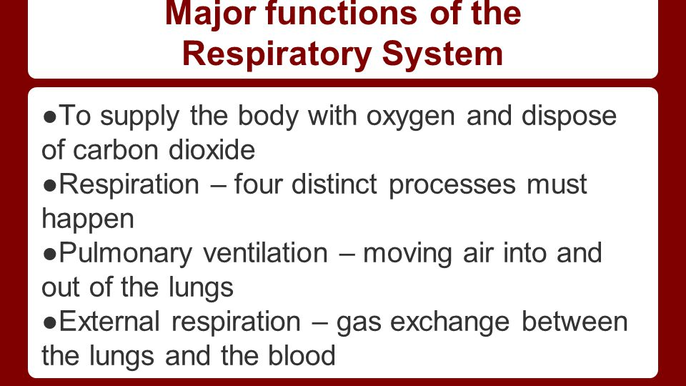 Major functions of the Respiratory System ●To supply the body with oxygen and dispose of carbon dioxide ●Respiration – four distinct processes must ha