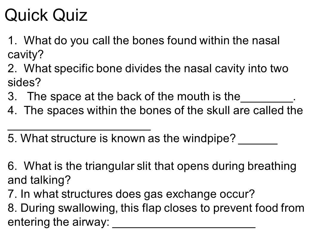 Quick Quiz 1. What do you call the bones found within the nasal cavity? 2. What specific bone divides the nasal cavity into two sides? 3. The space at