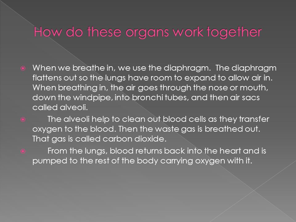  The circulatory system  We breathe in order to get oxygen to our red blood cells.