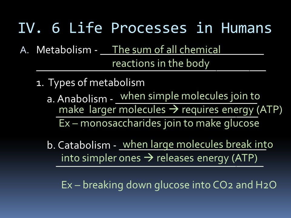 IV. 6 Life Processes in Humans A. Metabolism - ______________________________ __________________________________________ 1. Types of metabolism a. Ana