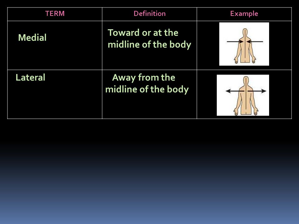 TERMDefinitionExample Medial Toward or at the midline of the body Lateral Away from the midline of the body