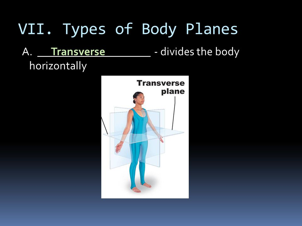 VII. Types of Body Planes A. ____________________ - divides the body horizontally Transverse