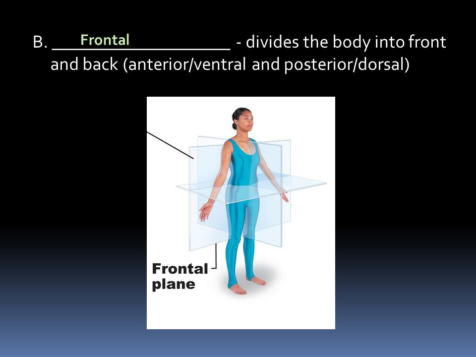 B. ____________________ - divides the body into front and back (anterior/ventral and posterior/dorsal) Frontal