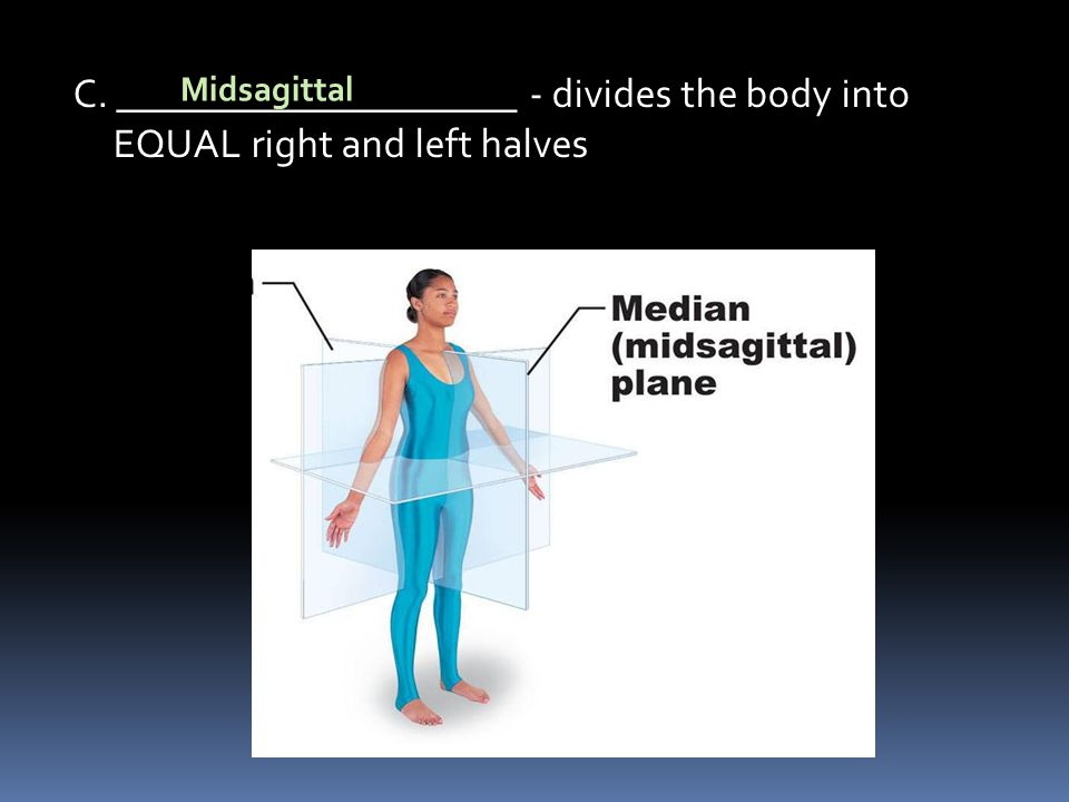 C. ____________________ - divides the body into EQUAL right and left halves Midsagittal