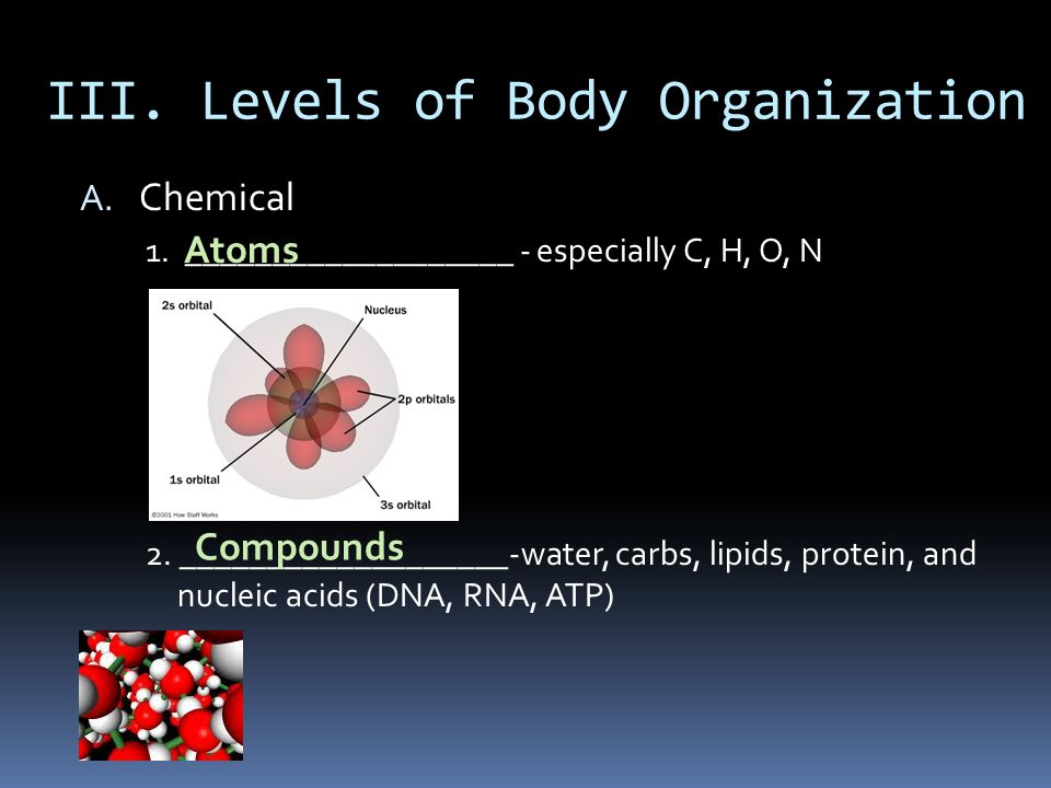 III. Levels of Body Organization A. Chemical 1. ___________________ - especially C, H, O, N 2. ___________________-water, carbs, lipids, protein, and