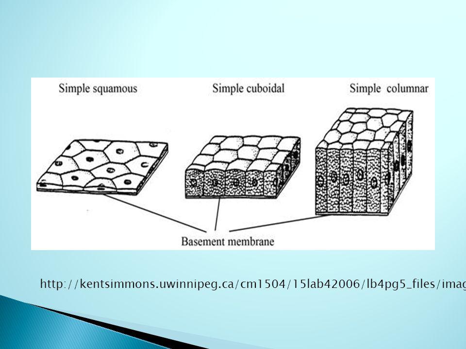 http://kentsimmons.uwinnipeg.ca/cm1504/15lab42006/lb4pg5_files/image002.jpg