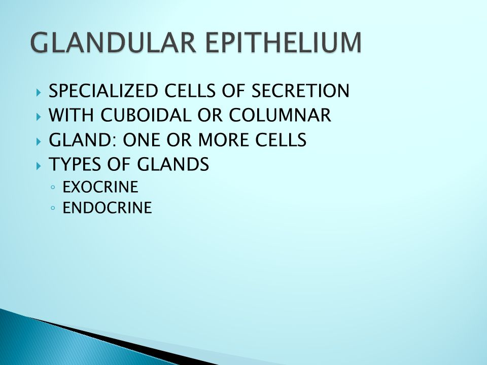  SPECIALIZED CELLS OF SECRETION  WITH CUBOIDAL OR COLUMNAR  GLAND: ONE OR MORE CELLS  TYPES OF GLANDS ◦ EXOCRINE ◦ ENDOCRINE