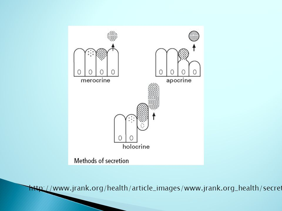 http://www.jrank.org/health/article_images/www.jrank.org_health/secretion.1.jpg