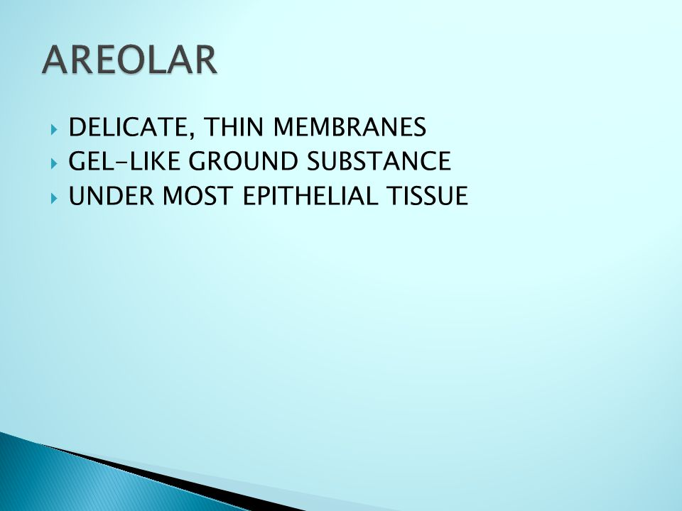 DELICATE, THIN MEMBRANES  GEL-LIKE GROUND SUBSTANCE  UNDER MOST EPITHELIAL TISSUE