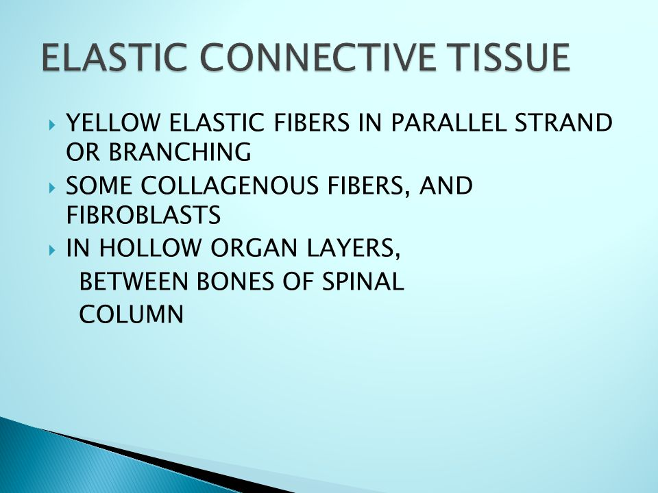 YYELLOW ELASTIC FIBERS IN PARALLEL STRAND OR BRANCHING SSOME COLLAGENOUS FIBERS, AND FIBROBLASTS IIN HOLLOW ORGAN LAYERS, BETWEEN BONES OF SPINAL COLUMN