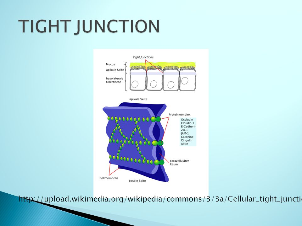 http://upload.wikimedia.org/wikipedia/commons/3/3a/Cellular_tight_junction_de.png
