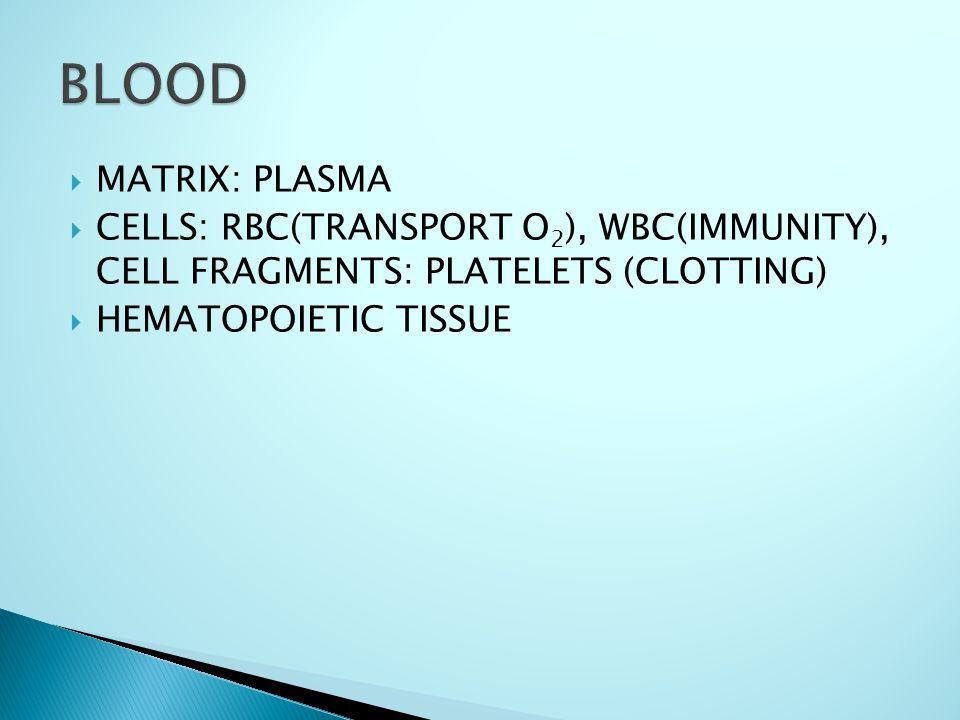  MATRIX: PLASMA  CELLS: RBC(TRANSPORT O 2 ), WBC(IMMUNITY), CELL FRAGMENTS: PLATELETS (CLOTTING)  HEMATOPOIETIC TISSUE