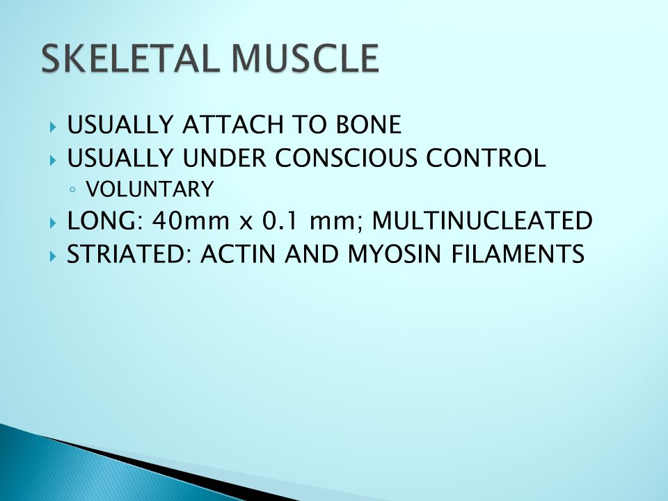  USUALLY ATTACH TO BONE  USUALLY UNDER CONSCIOUS CONTROL ◦ VOLUNTARY  LONG: 40mm x 0.1 mm; MULTINUCLEATED  STRIATED: ACTIN AND MYOSIN FILAMENTS