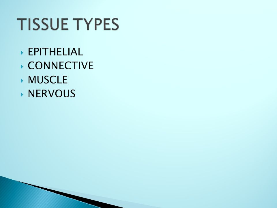  EPITHELIAL  CONNECTIVE  MUSCLE  NERVOUS