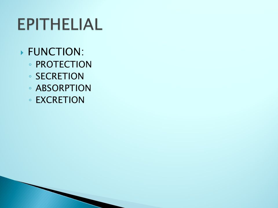 FFUNCTION: ◦P◦PROTECTION ◦S◦SECRETION ◦A◦ABSORPTION ◦E◦EXCRETION