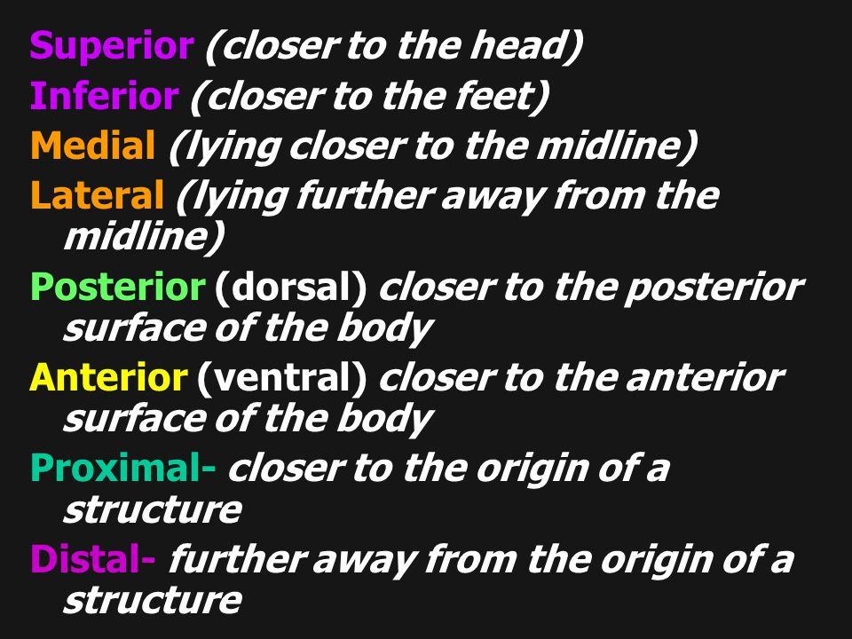 Superior (closer to the head) Inferior (closer to the feet) Medial (lying closer to the midline) Lateral (lying further away from the midline) Posteri