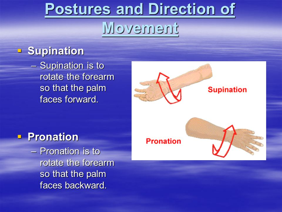  Supination –Supination is to rotate the forearm so that the palm faces forward.  Pronation –Pronation is to rotate the forearm so that the palm fac