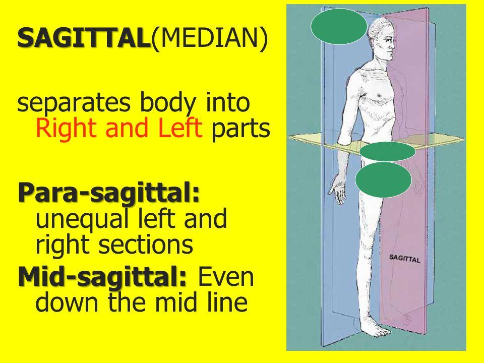 SAGITTAL SAGITTAL(MEDIAN) separates body into Right and Left parts Para-sagittal: Para-sagittal: unequal left and right sections Mid-sagittal: Mid-sag