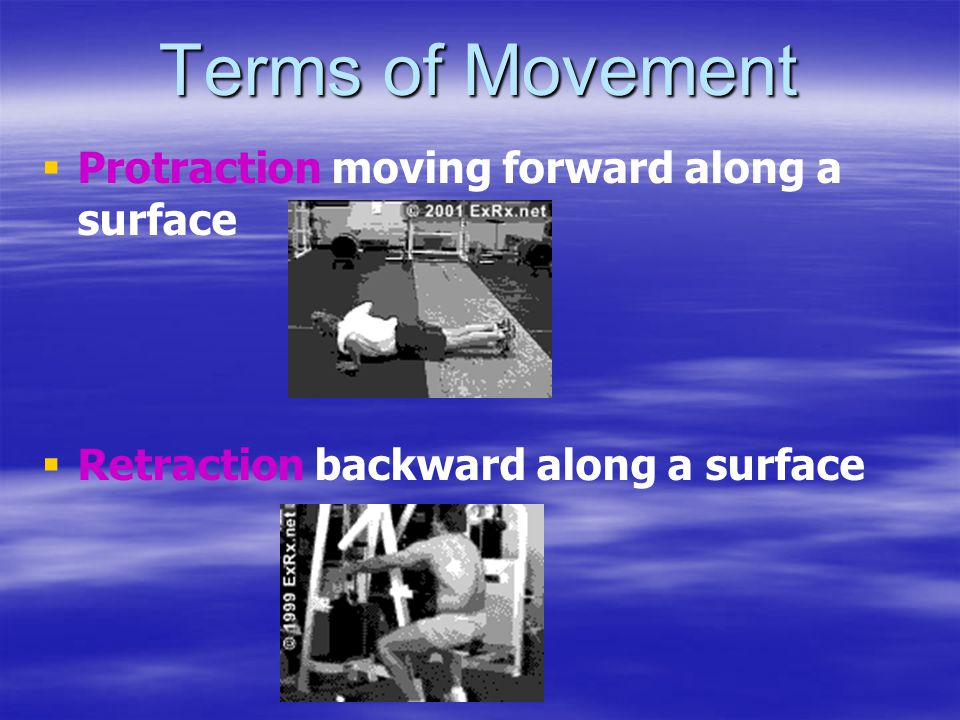 Terms of Movement   Protraction moving forward along a surface   Retraction backward along a surface