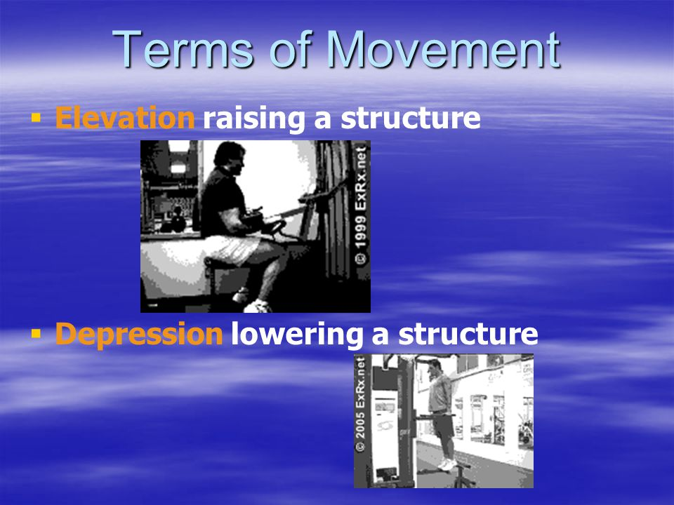 Terms of Movement   Elevation raising a structure   Depression lowering a structure
