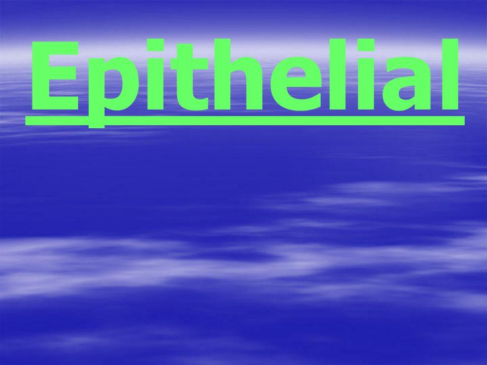 Epithelial
