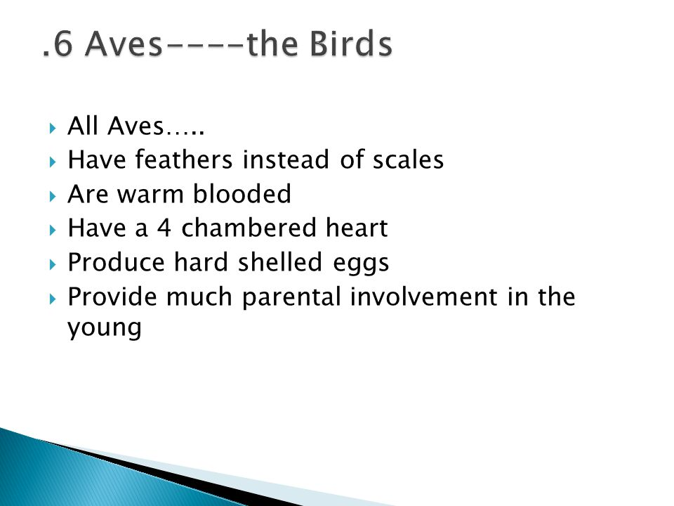  All Aves…..  Have feathers instead of scales  Are warm blooded  Have a 4 chambered heart  Produce hard shelled eggs  Provide much parental invo