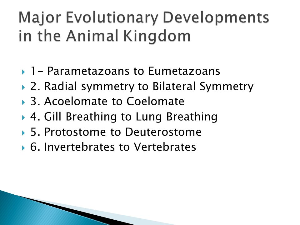  1- Parametazoans to Eumetazoans  2. Radial symmetry to Bilateral Symmetry  3. Acoelomate to Coelomate  4. Gill Breathing to Lung Breathing  5. P