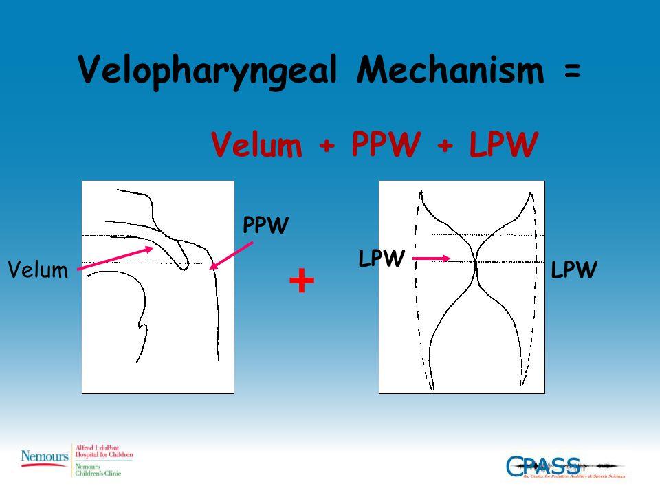 Velopharyngeal Mechanism = Velum + PPW + LPW + Velum PPW LPW