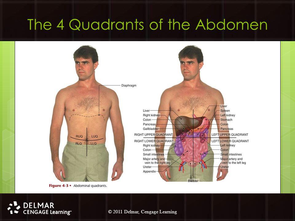 © 2010 Delmar, Cengage Learning 20 © 2011 Delmar, Cengage Learning The 4 Quadrants of the Abdomen